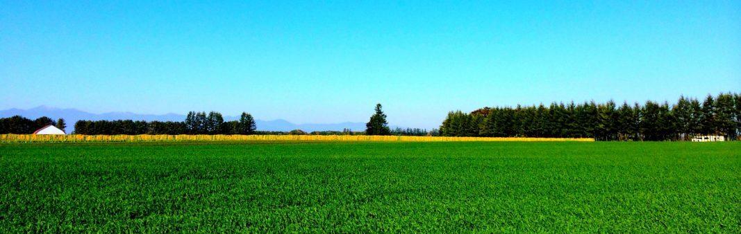 お婆さんの農作業風景